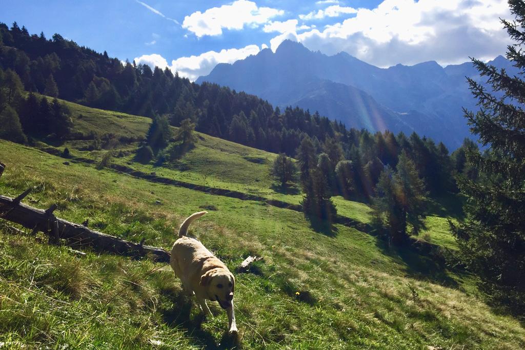 Met de hond de bergen in