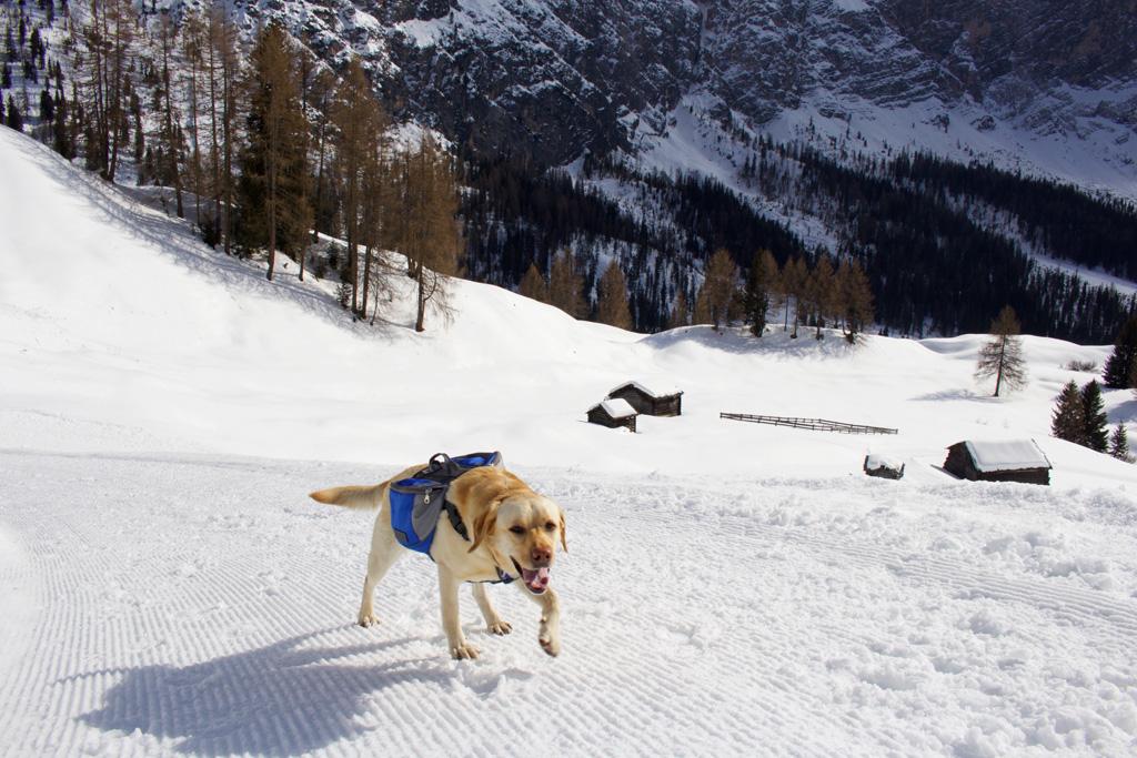 Wandelen met de hond in de bergen in de winter