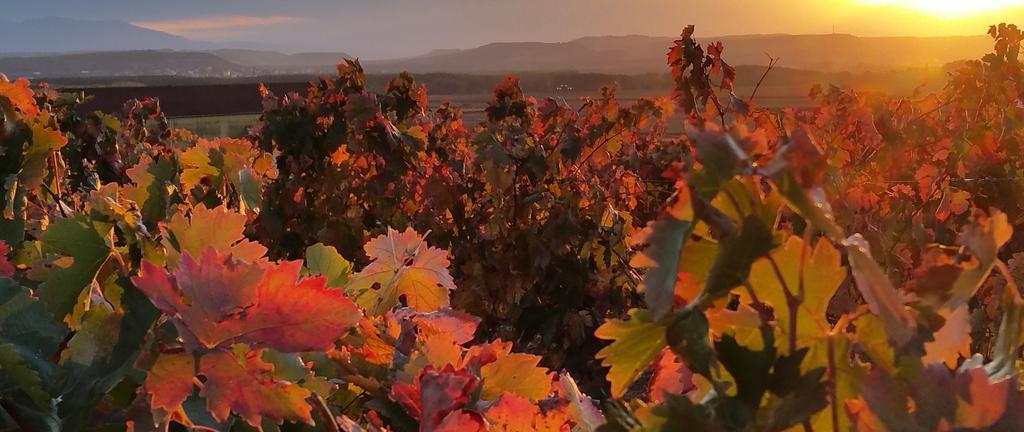 Vier der schönsten Weinwanderungen zum Genießen