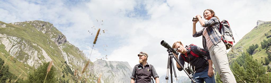 Wild spotten Nationaal Park Hohe Tauern