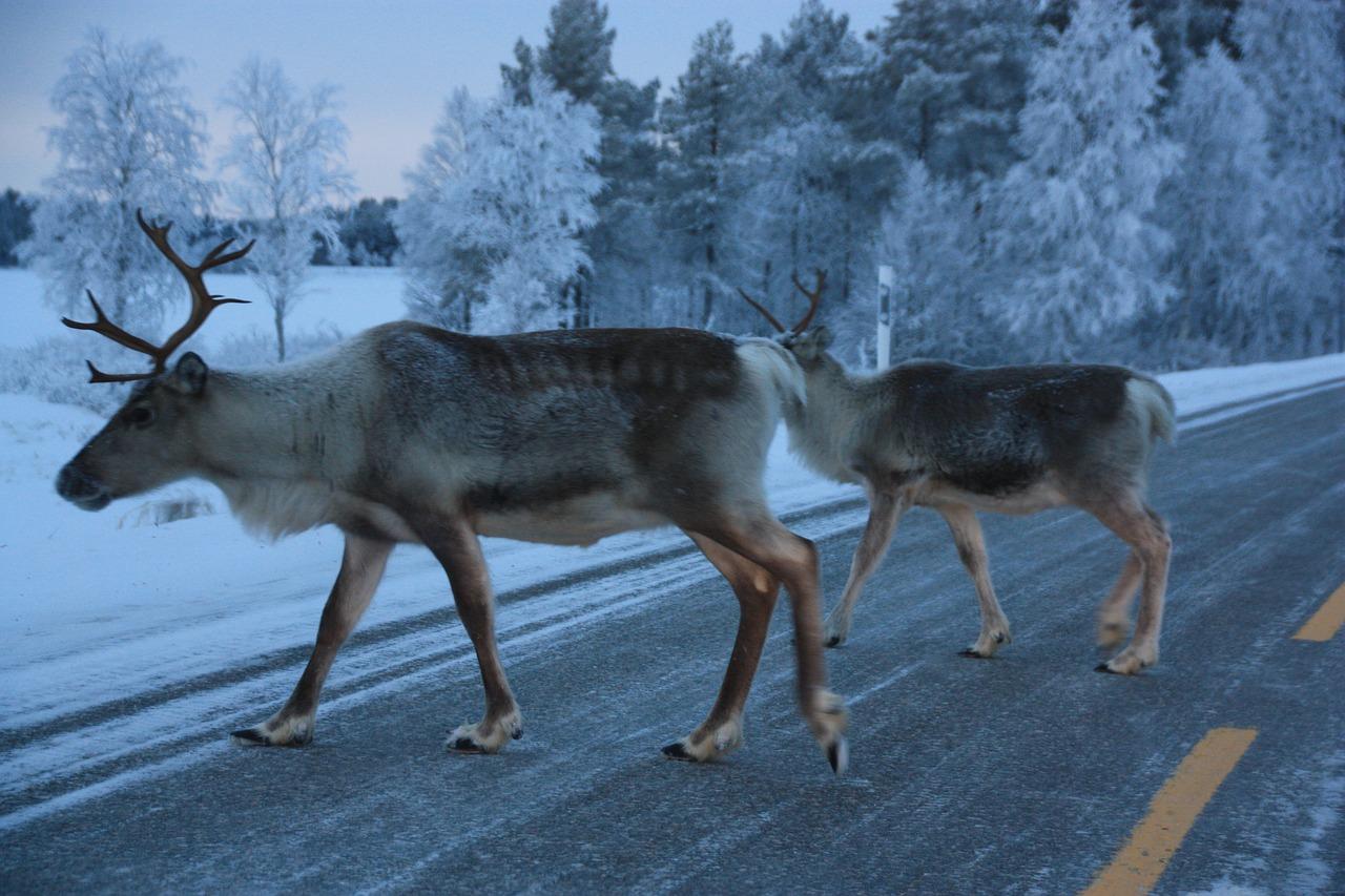 Elanden Finland