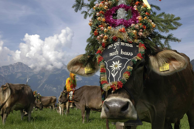 Almabtrieb in Tirol