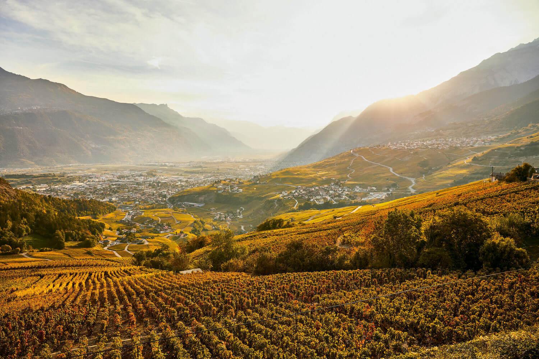 Wijnranken herfst Zwitserland