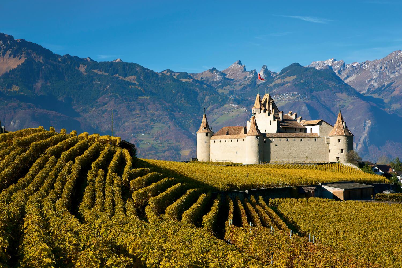 Wijngaard Zwitserland