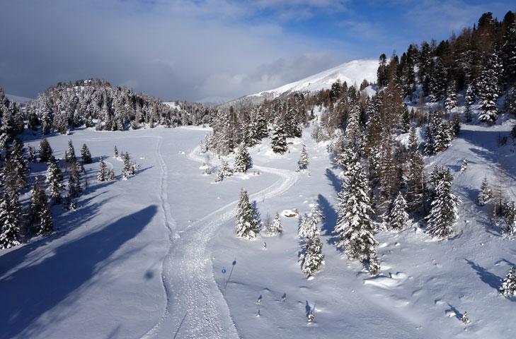 Skiën in een sprookjesachtige omgeving: het grootste dennenbos van Europa