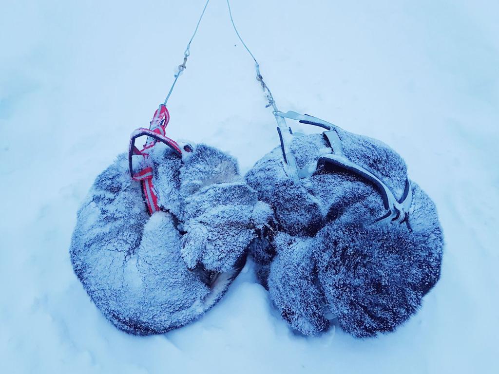 Husky in de sneeuw
