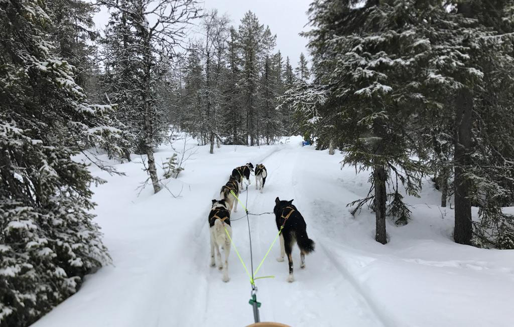 Een hondensledetocht in Trysil, Noorwegen