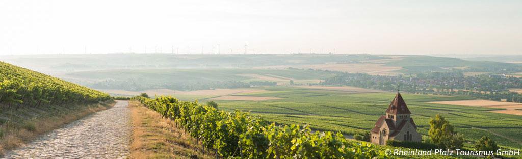Wandelen door het wijnlandschap van Rijnland-Palts