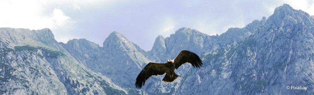 Steenarend vliegend hoog in de lucht tussen Alpentoppen