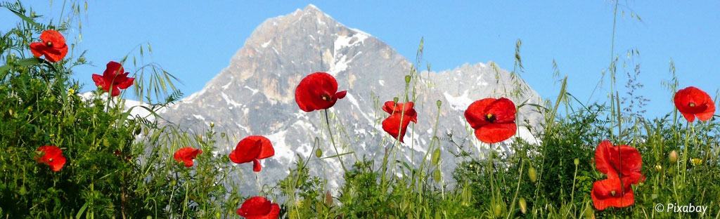 Alpenbloemen: deze bloemen zie je in de bergen