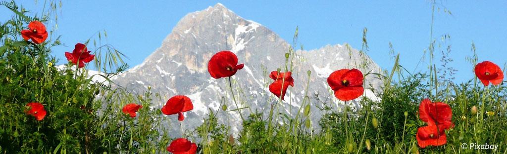 bloem bergen alpen