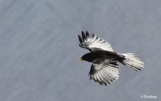 11 vogels die je in de Alpen kunt tegenkomen
