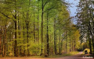 Wandelen Sauerland: de Sauerland-Waldroute