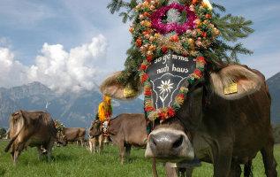 5 redenen om in de herfst naar het Zillertal te gaan