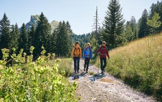 Culinaire wandeling in Mellau: langs bloeiende Alpenweides en de Kanisfluh (2044 m)