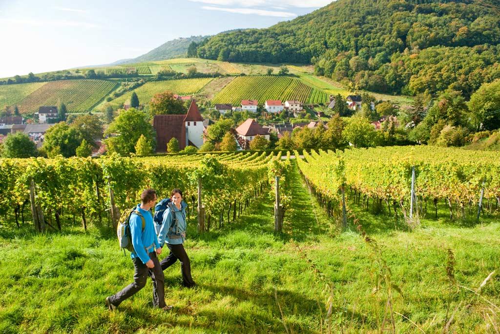 Wandelen tussen de wijngaarden in de Eifel