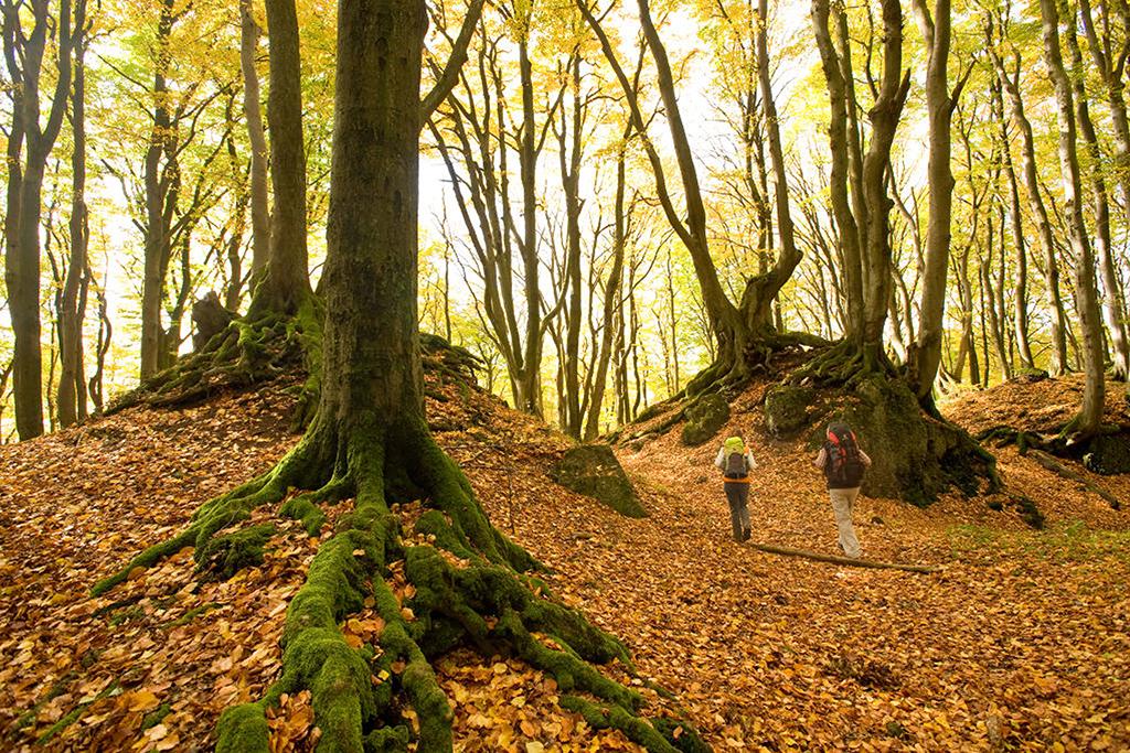dagtocht wandelen in de Eifel