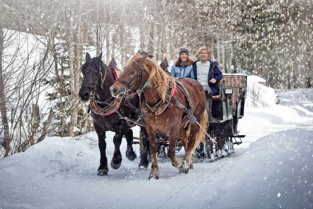 horse-drawn carriage skicircus