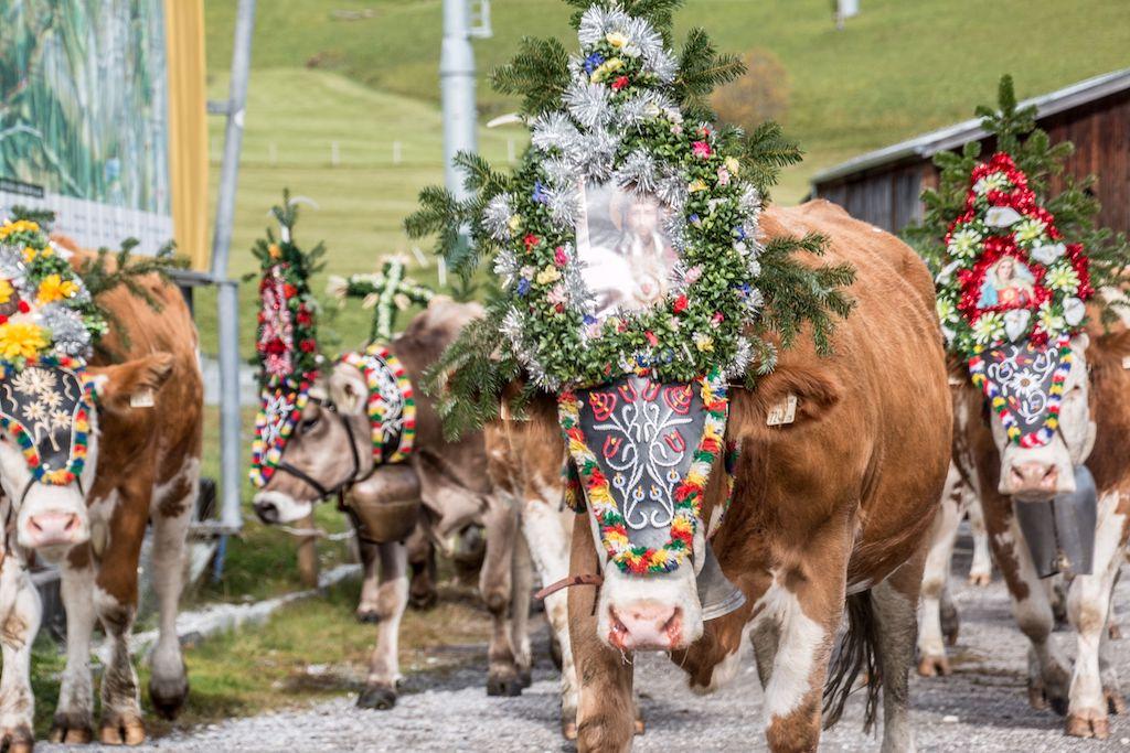 versierde koeien Almabtrieb
