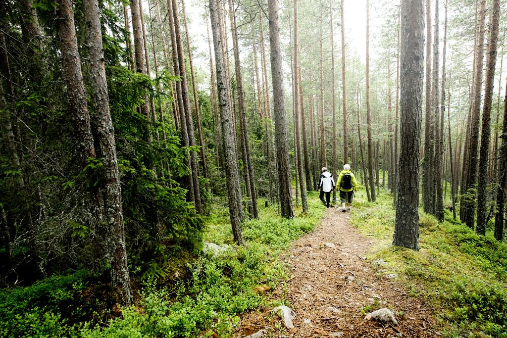 Wandelen door de bossen van Zweden