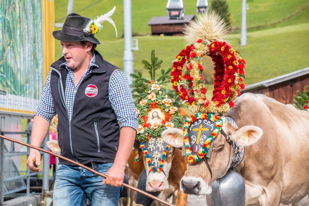 koeien versierd almabtrieb