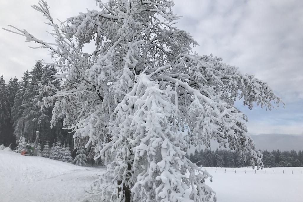 boom met sneeuw winterberg